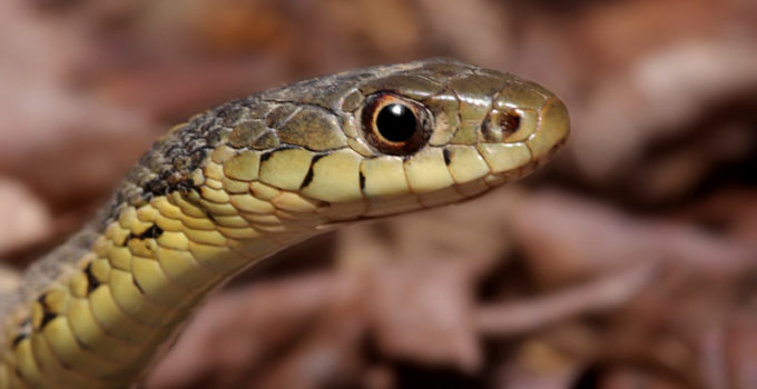 What Do Baby Snakes Eat?
