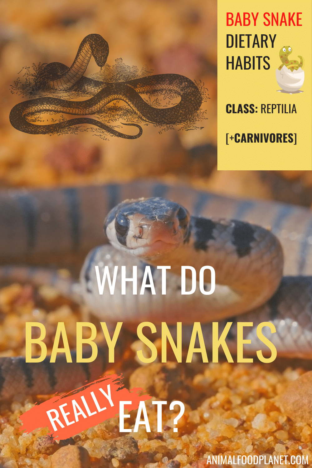 What Do Baby Snakes Really Eat?