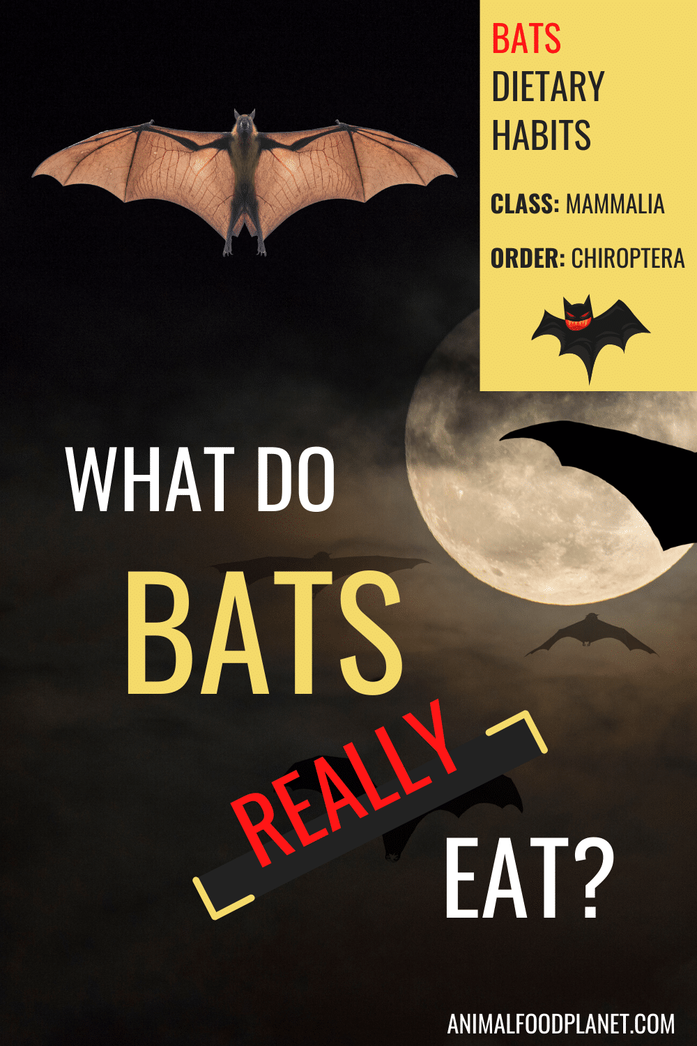 What Do Bats Really Eat?