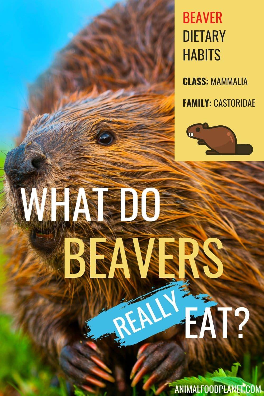What Do Beavers Eat?
