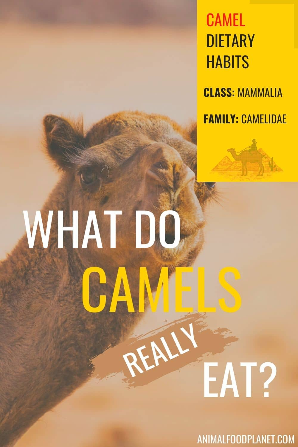 What Do Camels Really Eat?