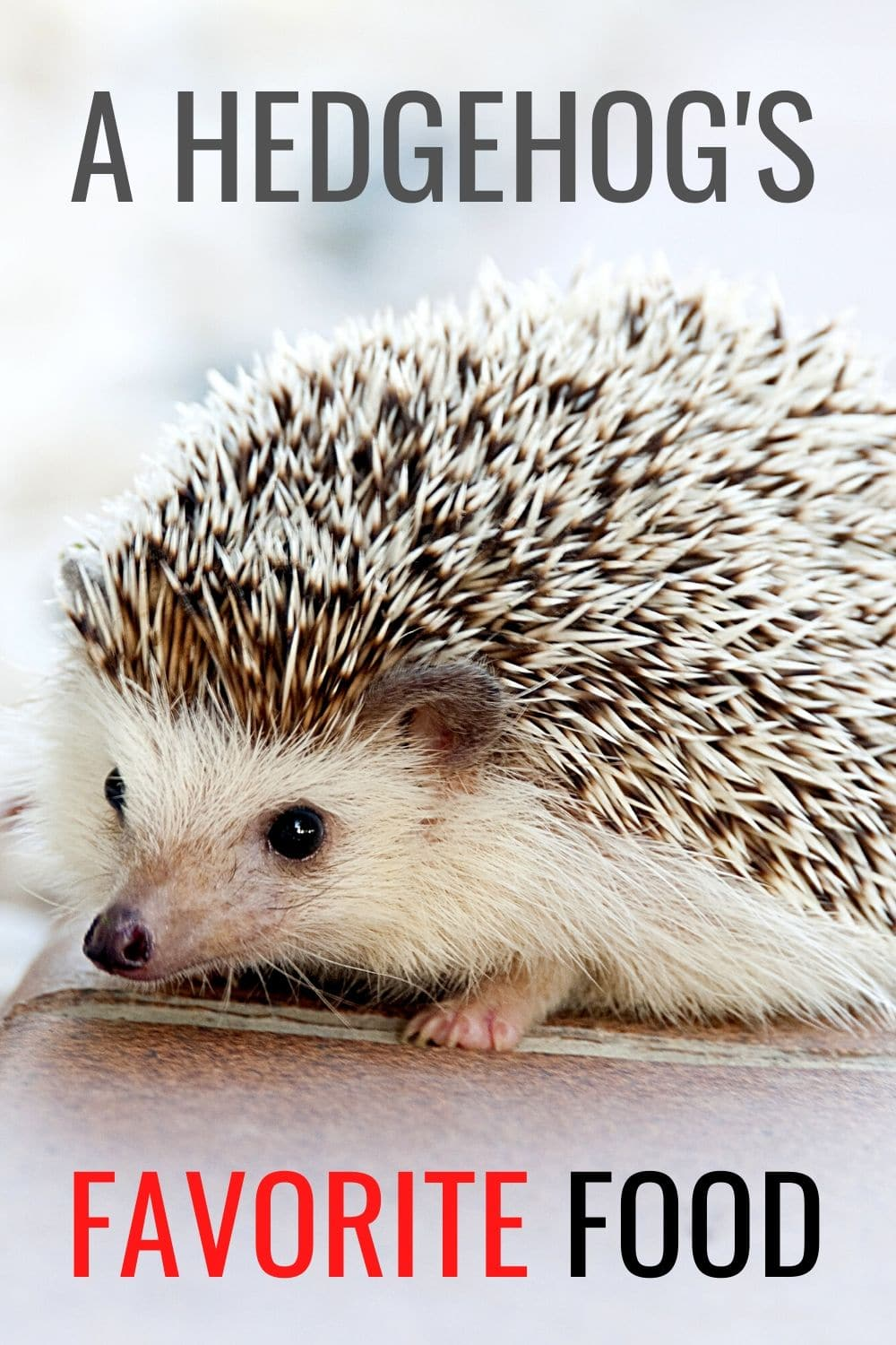 What Do Hedgehogs Eat?