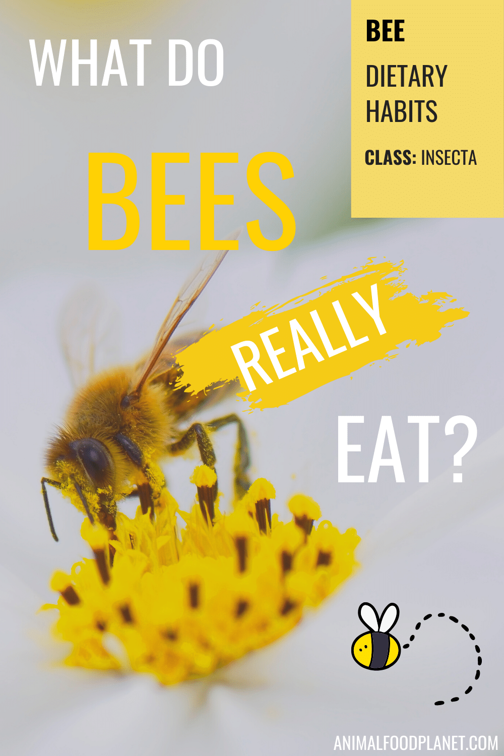 What Do Bees Really Eat?