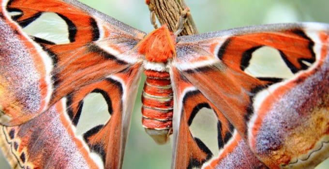 What Do Moths Eat?