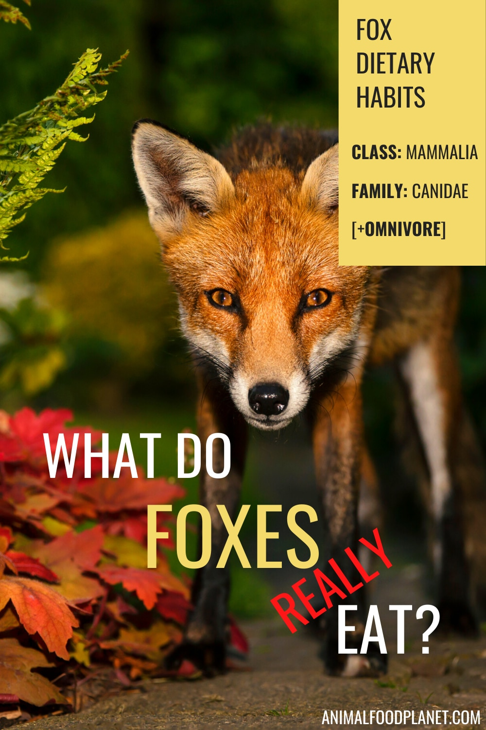 What Do Foxes Really Eat?