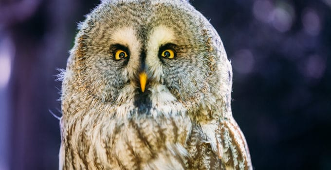 What Do Owls Eat?