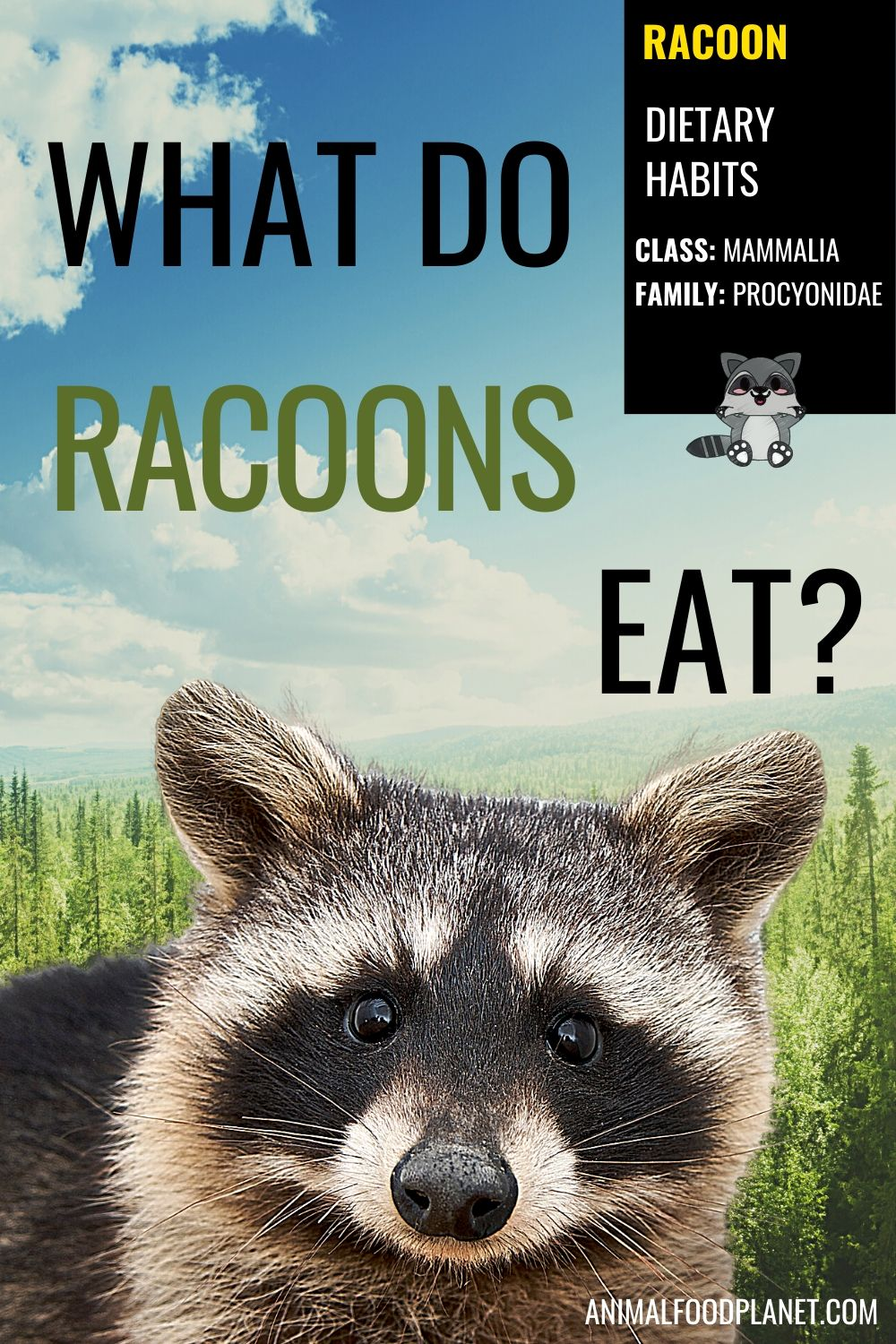 What Do Racoons Eat?