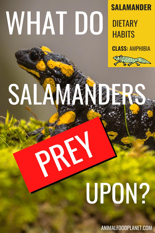 What Do Salamanders Prey Upon?