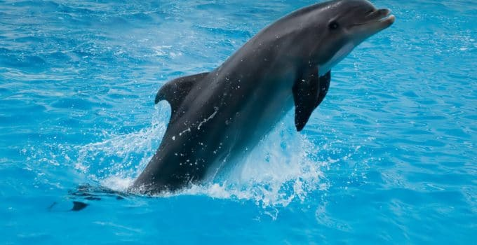 What Do Dolphins Eat?