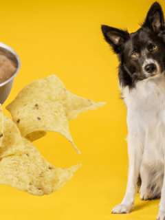 Can Dogs Have Tortilla Chips