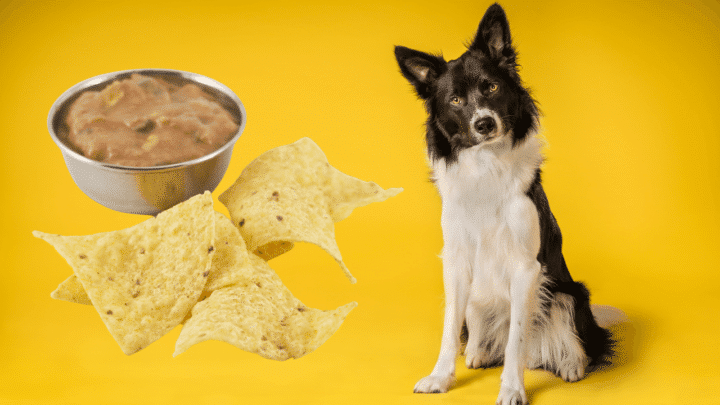 Can Dogs Have Tortilla Chips? Really?