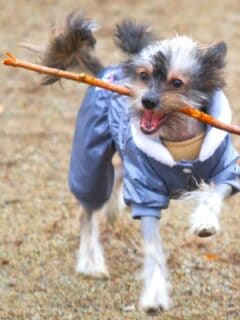 Why Dogs Like Sticks