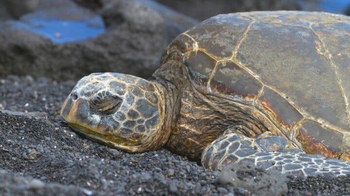 How Long Do Turtles Sleep?