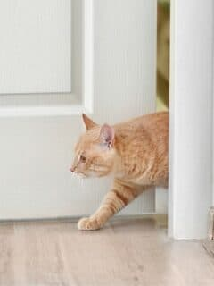 How To Keep a Cat out of a Room