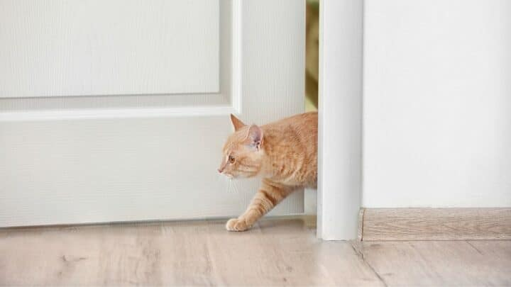 4 Bulletproof Ways to Keep a Cat out of a Room
