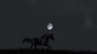 What Do Horses Do At Night