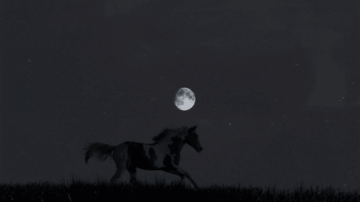 What Do Horses Do At Night – The Answer!