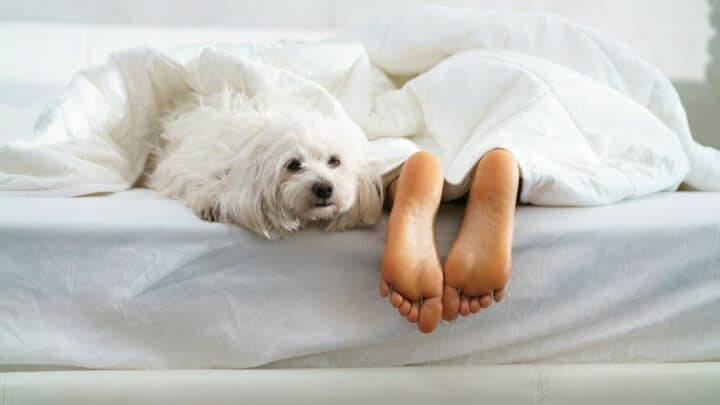 6 Reasons Why Dogs Like to Sleep at your Feet