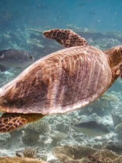 How Can Turtles Breathe Underwater