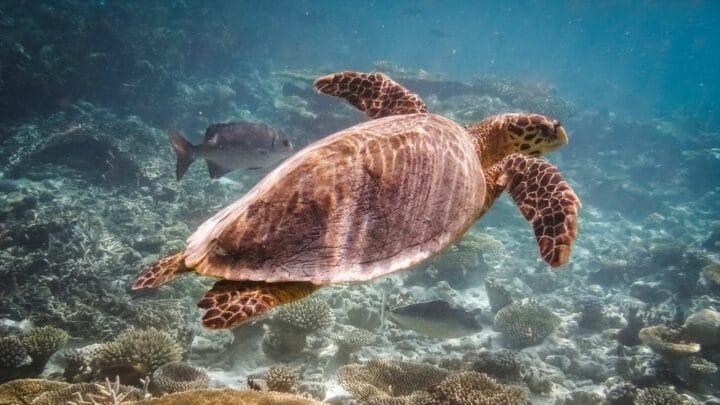 Can Turtles Breathe Underwater? — Breathtaking Findings!