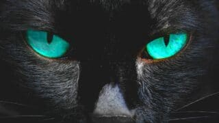 How Do Cats See