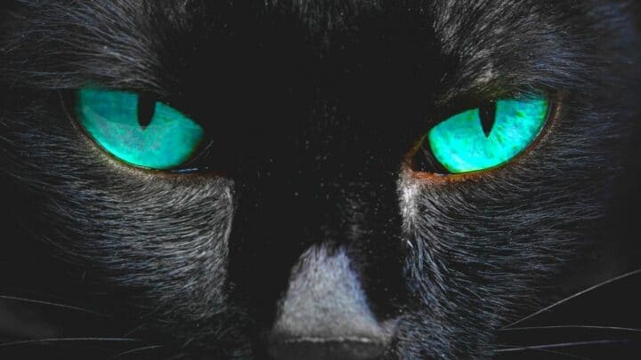 Here's How Cats See The World — Stunning!