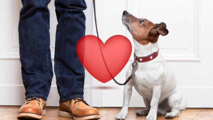 """How Do Dogs Say """"I Love You""""? ― 11 Ways!"""