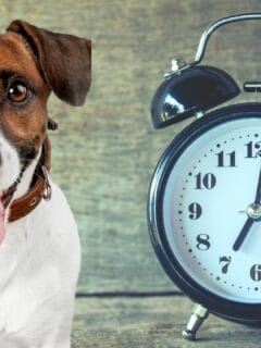 How Long is an Hour in Dog Time