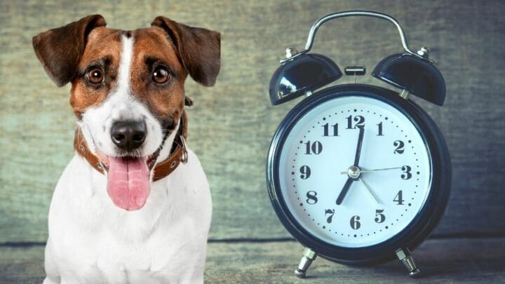 How Long is an Hour in Dog Time? — Revealed!