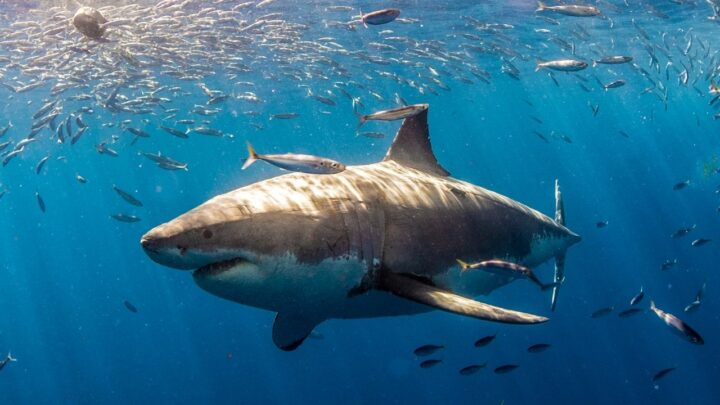 How Many Bones Do Sharks Have? — The Answer Will Shock You!