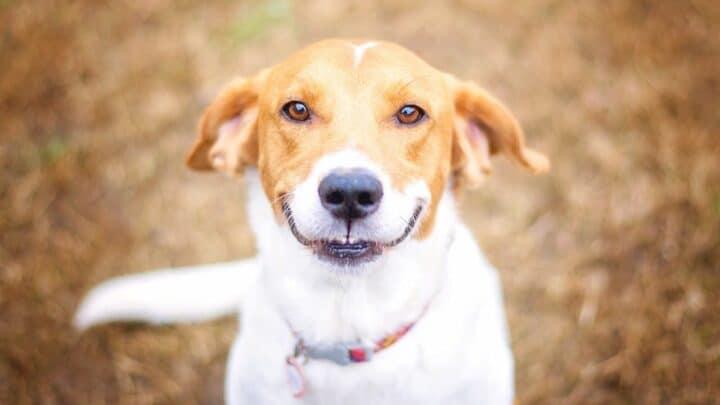3 Tactics to Make Your Dog Smile — Big Time!