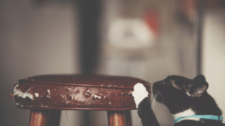How to Fix Cat Scratches on Wood Frame – For GOOD!
