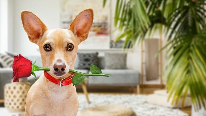 """""""My Dog Always Carries Something in His Mouth"""" — Here's Why!"""