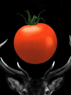 Will Deer Eat Tomato Plants