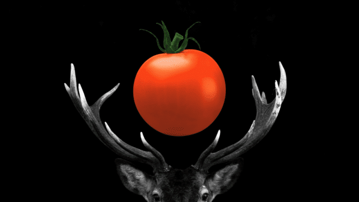 Will Deer Eat Tomato Plants? What Do You Think?