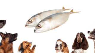 Will Dogs Eat Fish