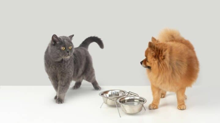 How To Tell If A Dog Is Aggressive Towards Cats — 8 Signs!