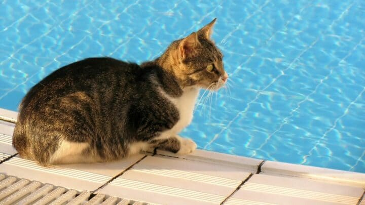 Can Cats Swim? The Truth!