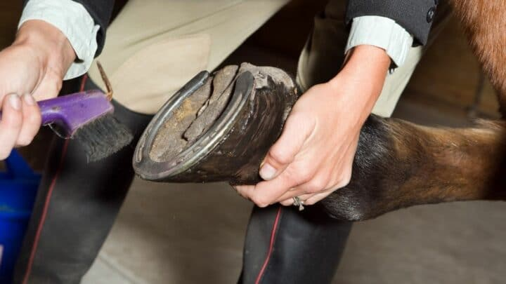 How to Clean Horse Hooves: A Step-by-Step Guide