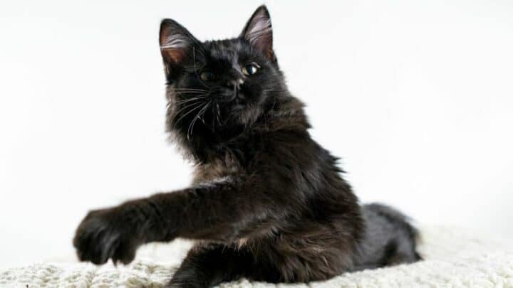 Why Do Cats Knock Things Off  – Makes Sense!