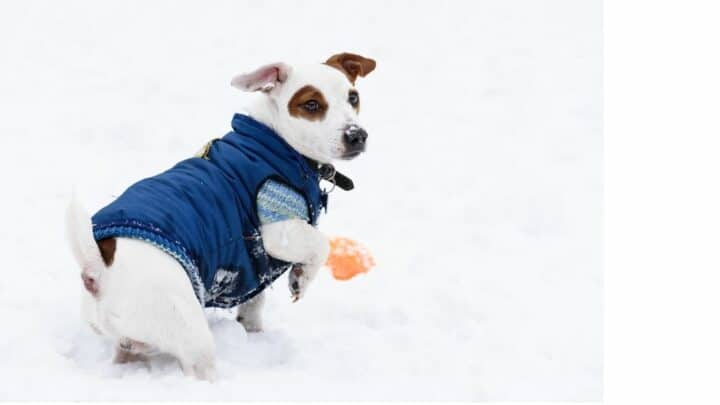 How to Keep Dogs Warm Outside ― Our Top Tips
