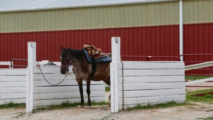 How Much Space Does a Horse Need?
