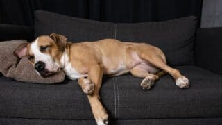 7 Tips To Get Your Dog Off The Couch