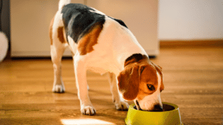 Best Low Carbohydrate Dog Food