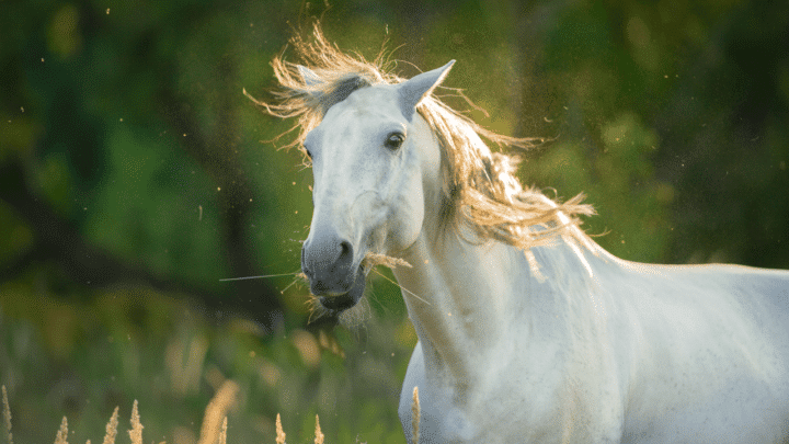 What do Horses Do for Fun? Let's see!