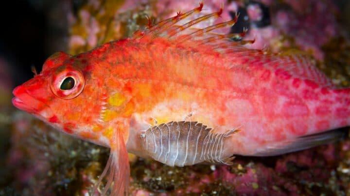 Can Isopods Breathe Underwater?