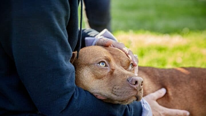 How Does a Dog Feel When Rehomed?