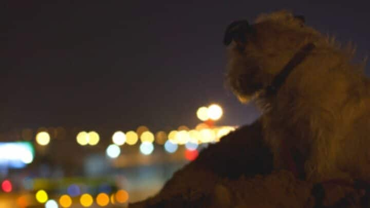 Why Is Your Dog Panting and Restless at Night? — Here's Why!