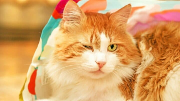 Why Do Cats Wink? Oh!