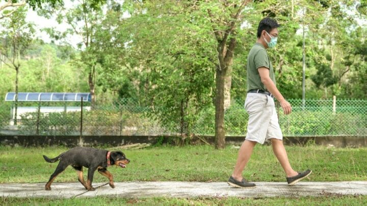 Why Is My Dog Following Me all of a sudden? — 9 Reasons